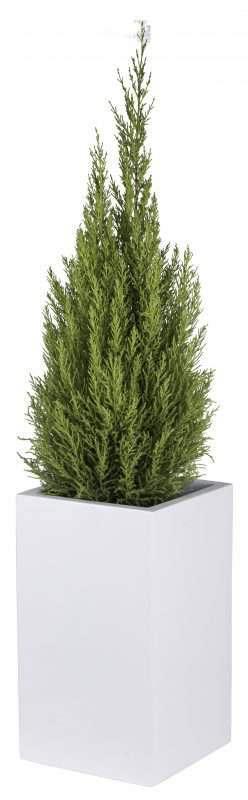 sirre-plantenbak