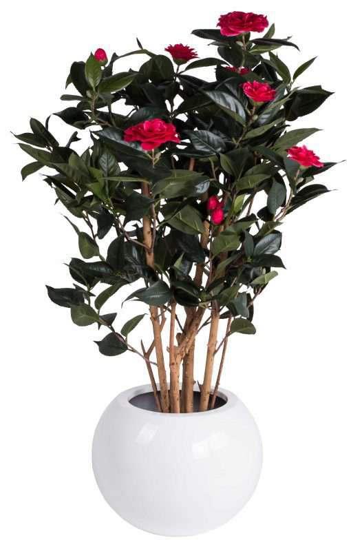 darcy-bloempot-met-plant
