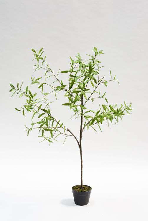 kunst olijfboom